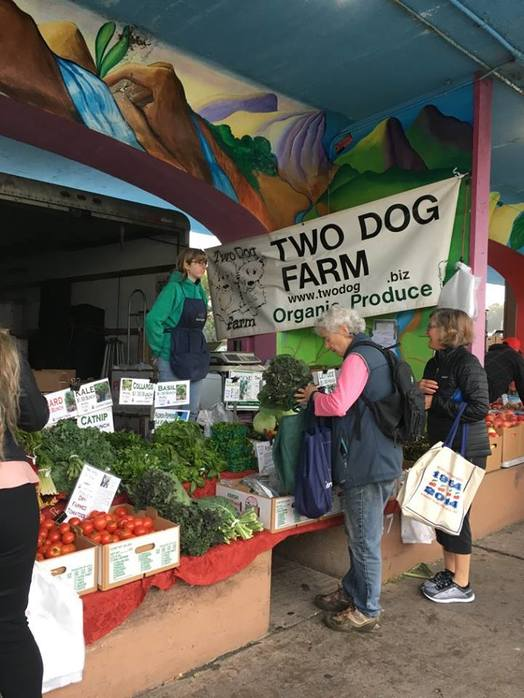 Two Dog Farm - News